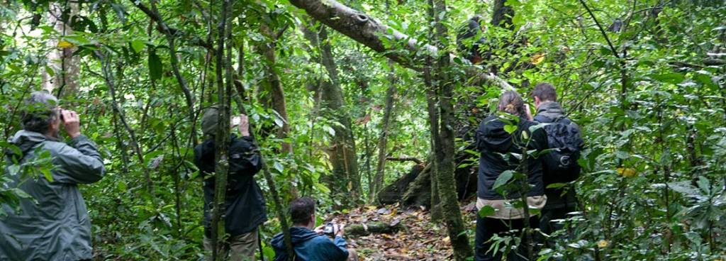 12 Day Gorilla Trekking Safari Uganda Wildlife & Chimpanzee Tracking Tour