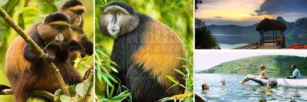 golden-monkey-treeking-and-lake bunyonyi