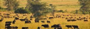 Uganda Safari Attractions