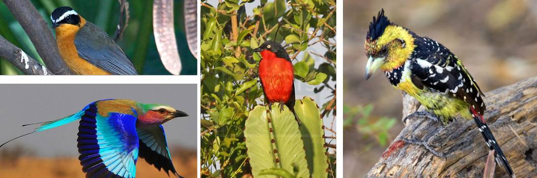 bird-watching-akagera
