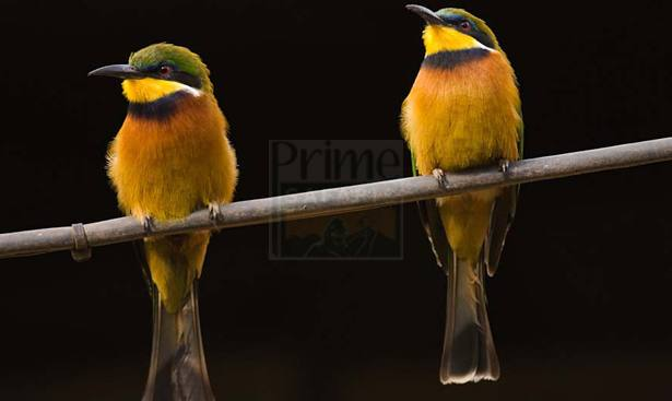 birding-bwindi-forest-np