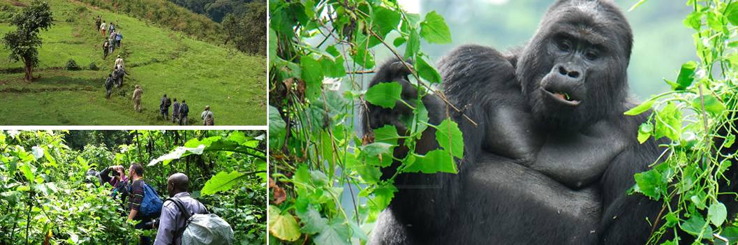 3 Days Cheap Uganda Gorilla Safari Bwindi Holiday Budget Gorilla Safari Uganda