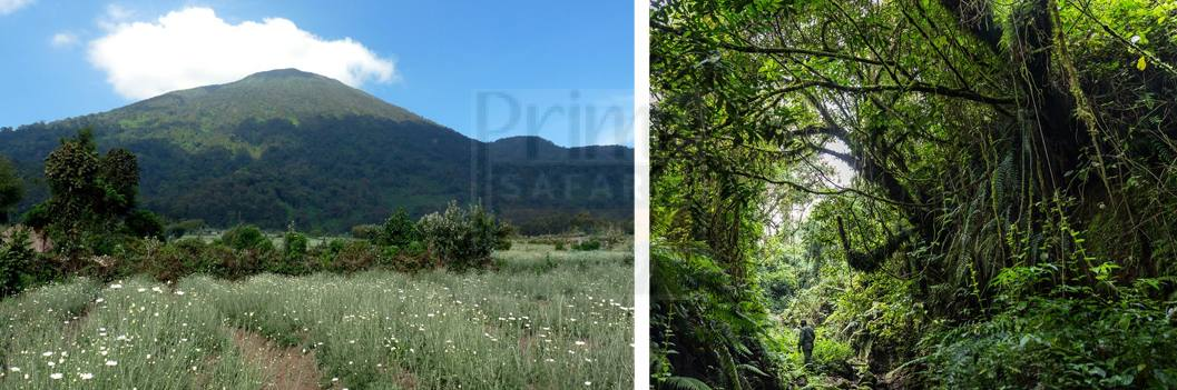 flora-virunga-volcanoes