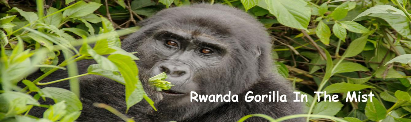 Rwanda Gorilla Safaris and Tours