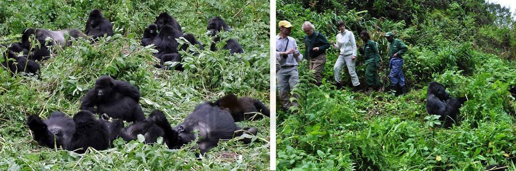 gorilla-trekking- in-bwindi np