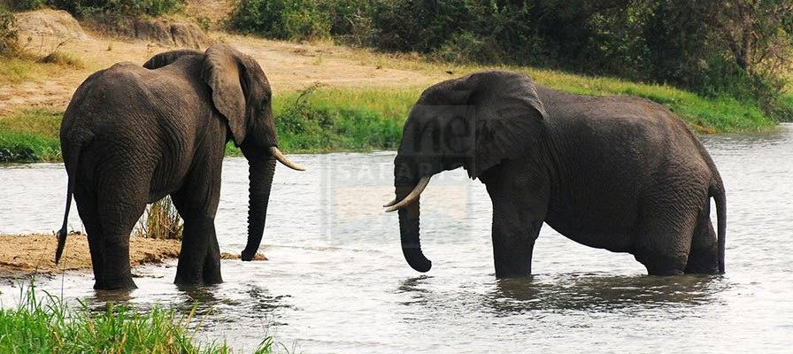 7 Days Uganda Gorilla Trekking Safari, Chimpanzee, Scenery & Wildlife Tour